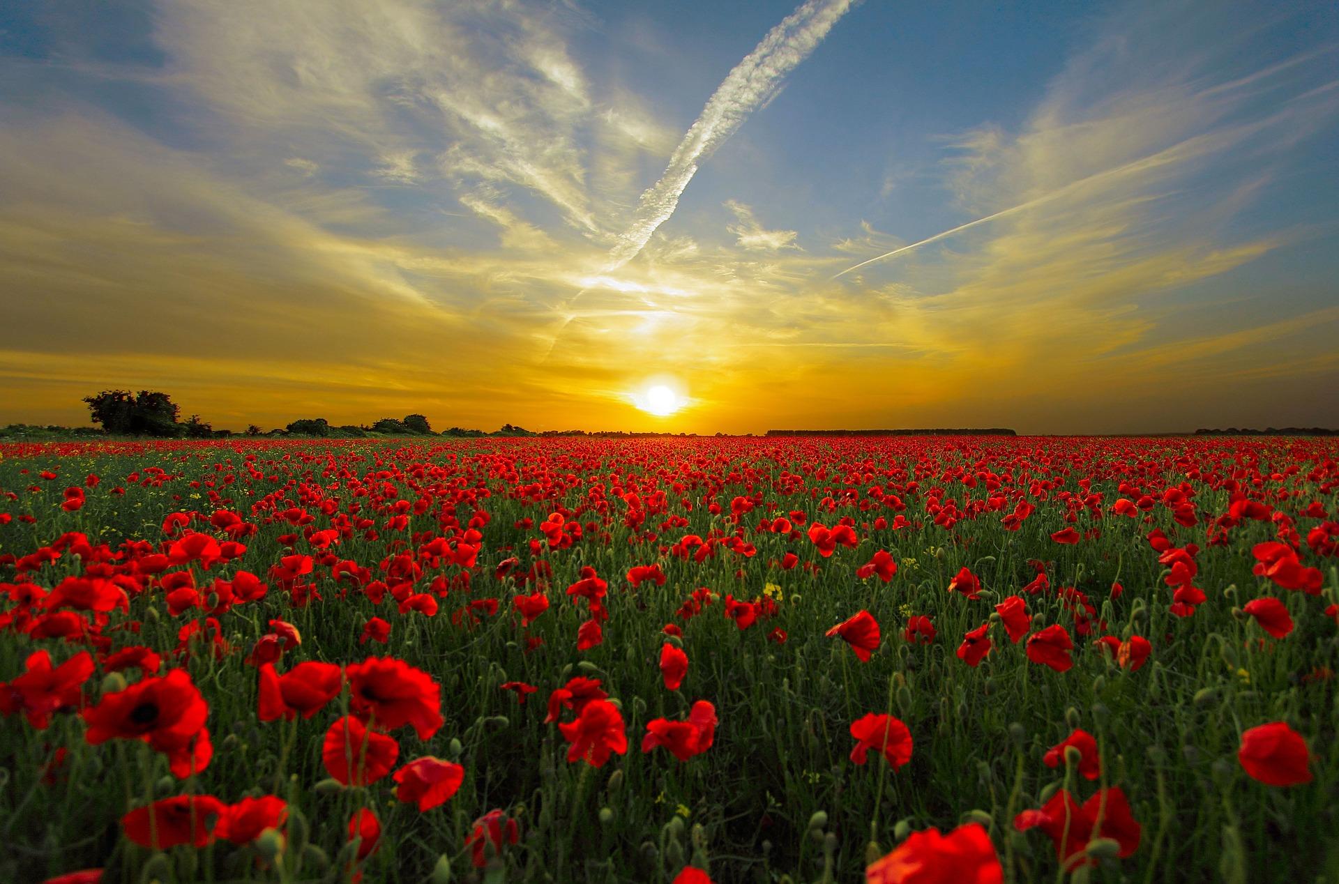 Shemesh Word: Shemesh: Shining Like The Sun