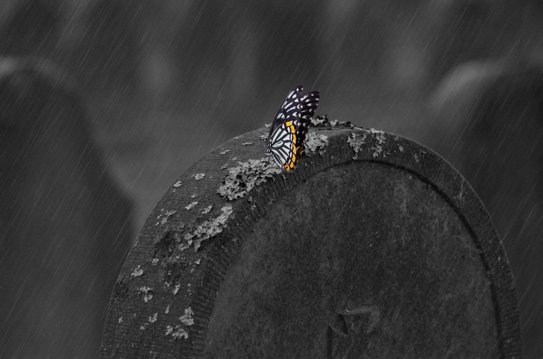 Huskyherz_pixabay